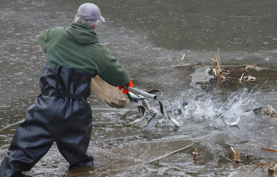 Caswell gallery blog page 10 for Trout fishing ponds near me